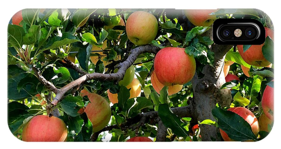 Apple IPhone X Case featuring the photograph Apple Harvest - Digital Painting by Carol Groenen