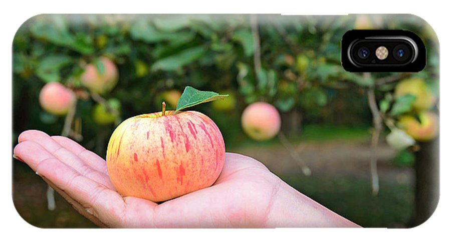 Apple IPhone X Case featuring the photograph Apple Pick by Maria Dryfhout