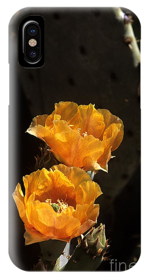 Cactus IPhone X Case featuring the photograph Apricot Blossoms by Kathy McClure