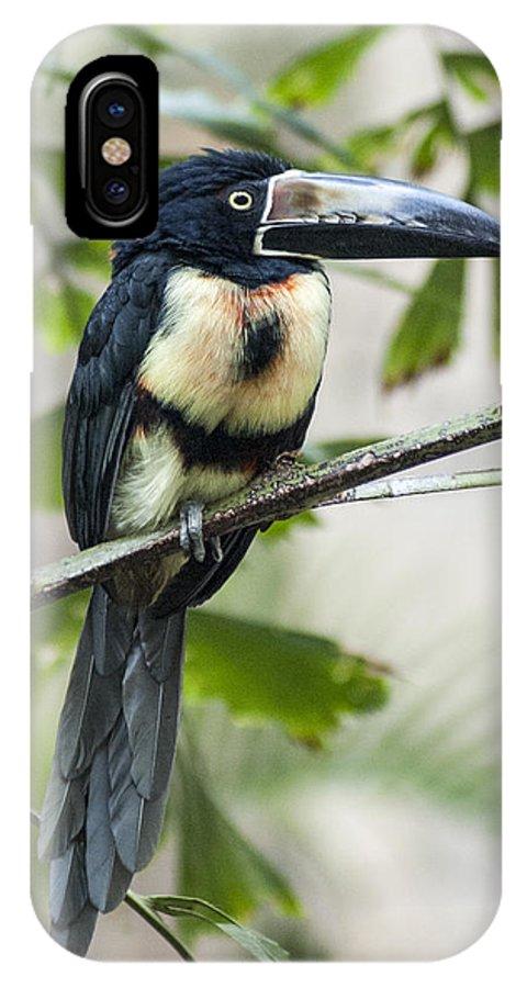 Bird IPhone X Case featuring the photograph Aracari by Richard Kitchen