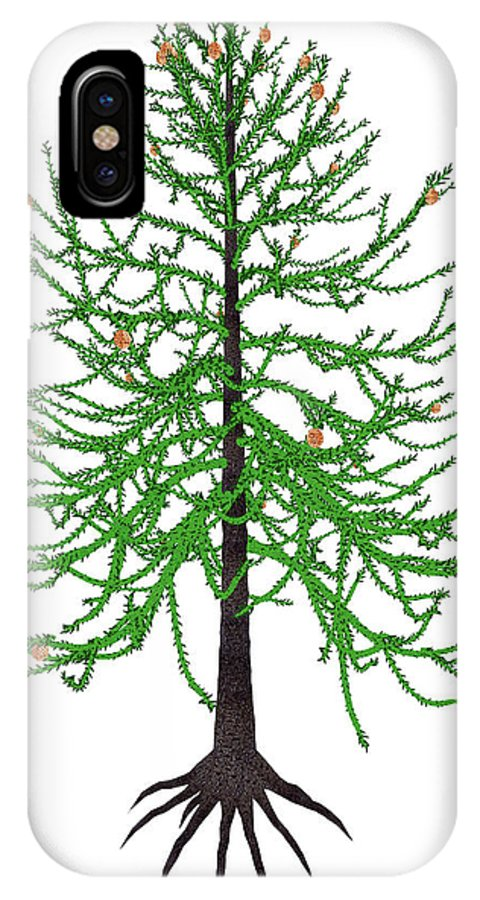 Tree IPhone X Case featuring the photograph Araucaria Prehistoric Tree by Elena Duvernay