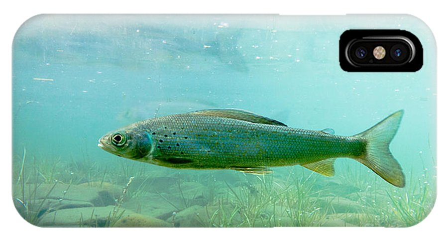 Animal IPhone X Case featuring the photograph Arctic Grayling Or Thymallus Arcticus Underwater by Stephan Pietzko