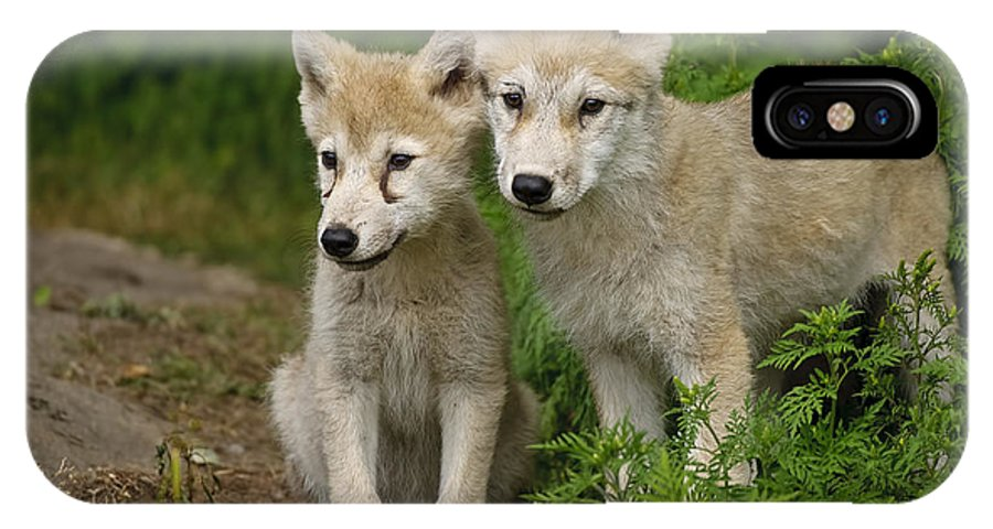 Arctic Wolf Puppies IPhone X Case