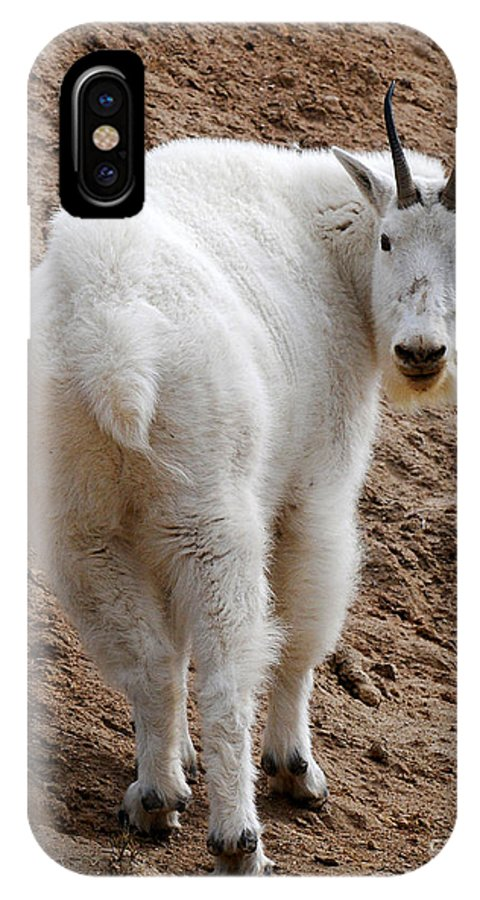 Wildlife IPhone X Case featuring the photograph Are You Following Me by Vivian Christopher