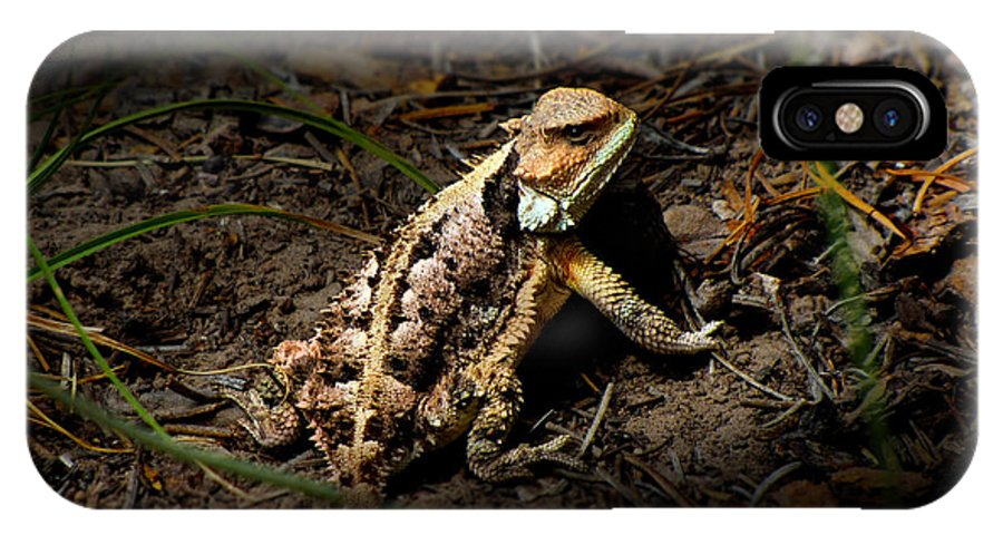Reptile IPhone X Case featuring the photograph Arizona Horned Lizard by John Timble