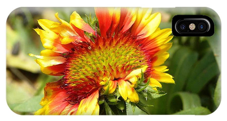 Flower IPhone X Case featuring the photograph Askew by Tisha Clinkenbeard