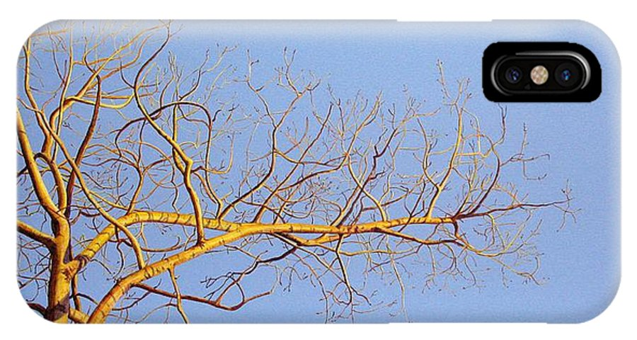 Aspen Painting IPhone X Case featuring the painting Aspen In The Autumn Sun by Elaine Booth-Kallweit