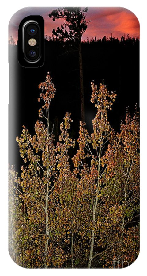 Aspens IPhone X Case featuring the photograph Aspen Shadow by Susan Chesnut