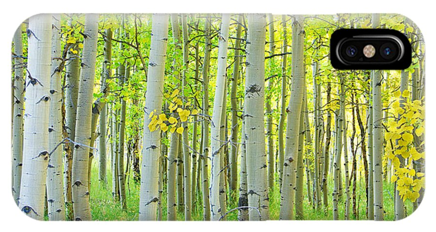 Aspens IPhone X Case featuring the photograph Aspen Tree Forest Autumn Time by James BO Insogna