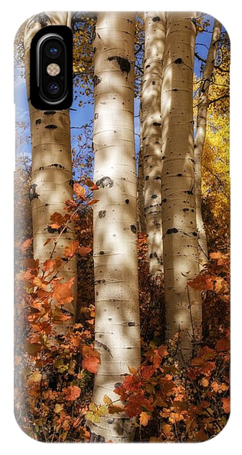 Aspens IPhone X Case featuring the photograph Aspen Trunks And Red by Mitch Johanson