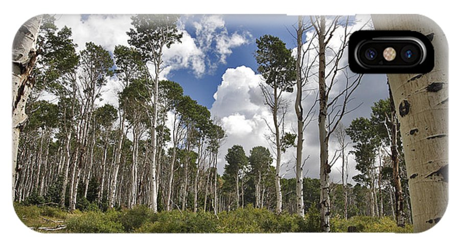 3scape IPhone Case featuring the photograph Aspen Grove by Adam Romanowicz