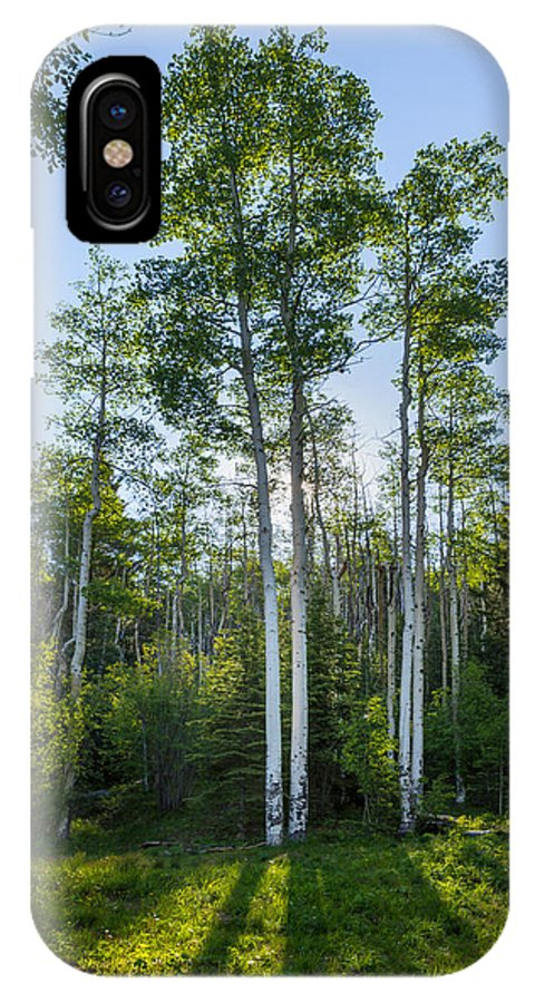 Aspen IPhone X Case featuring the photograph Aspens At Sunrise 1 - Santa Fe New Mexico by Brian Harig