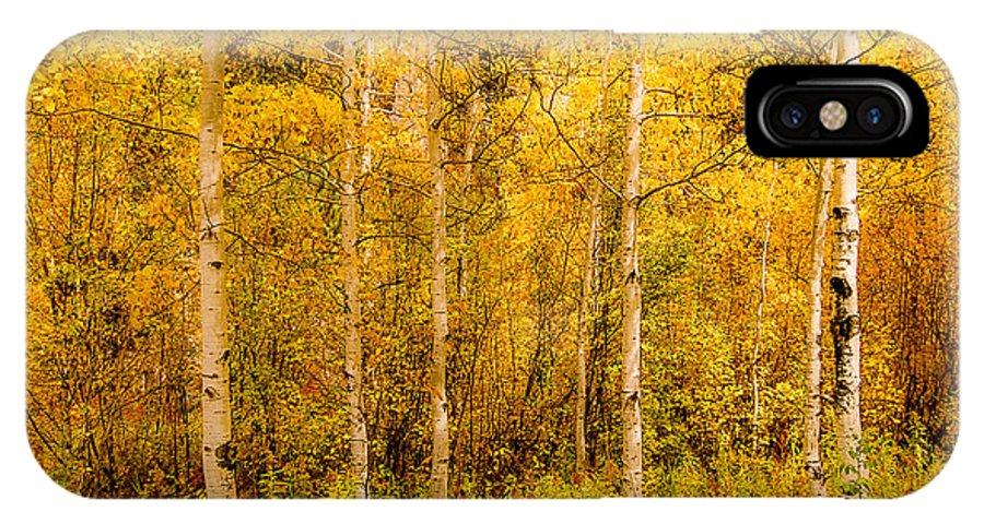 Aspen IPhone X Case featuring the photograph Aspens In Autumn by Dakota Light Photography By Dakota