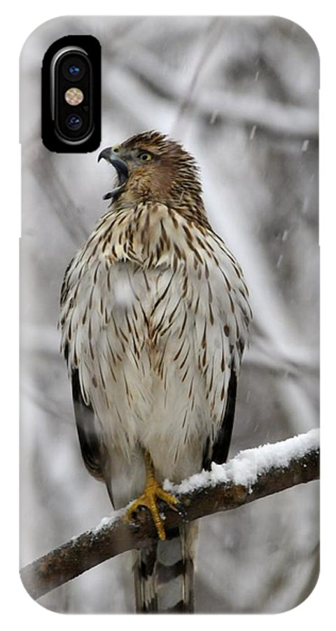 Red-tail Hawk IPhone X Case featuring the digital art Attention Please by Leland Lewis