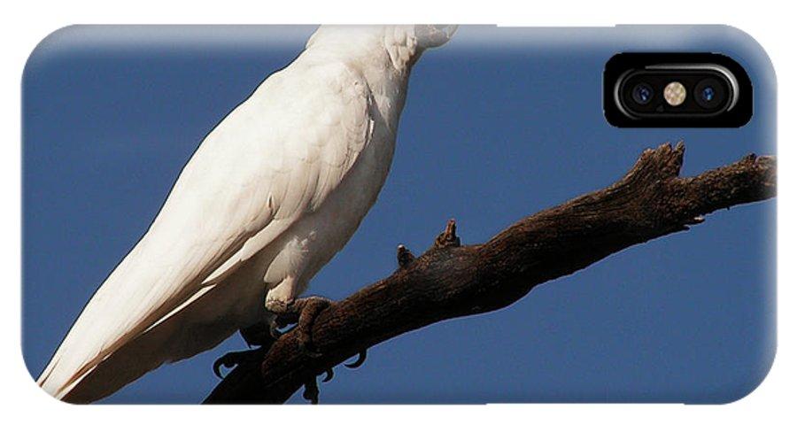 Bird IPhone X Case featuring the photograph Australian Bird by Ben Yassa