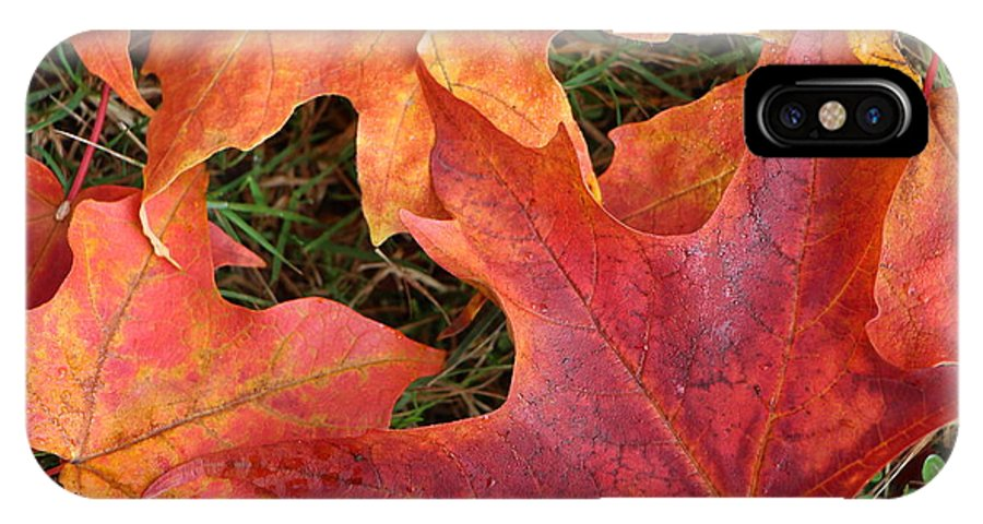 Leaves IPhone X Case featuring the photograph Autum Leaves by Brigitte Mueller