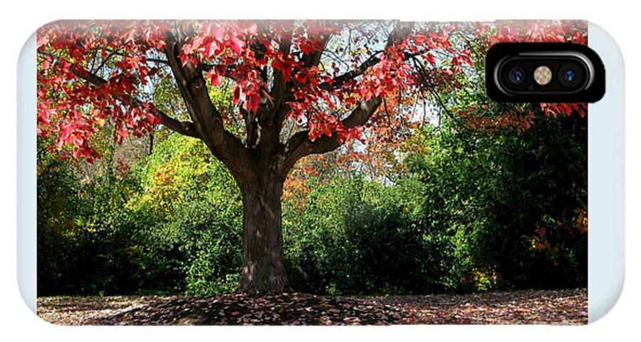 Autumn IPhone Case featuring the photograph Autumn Ablaze by Ann Horn