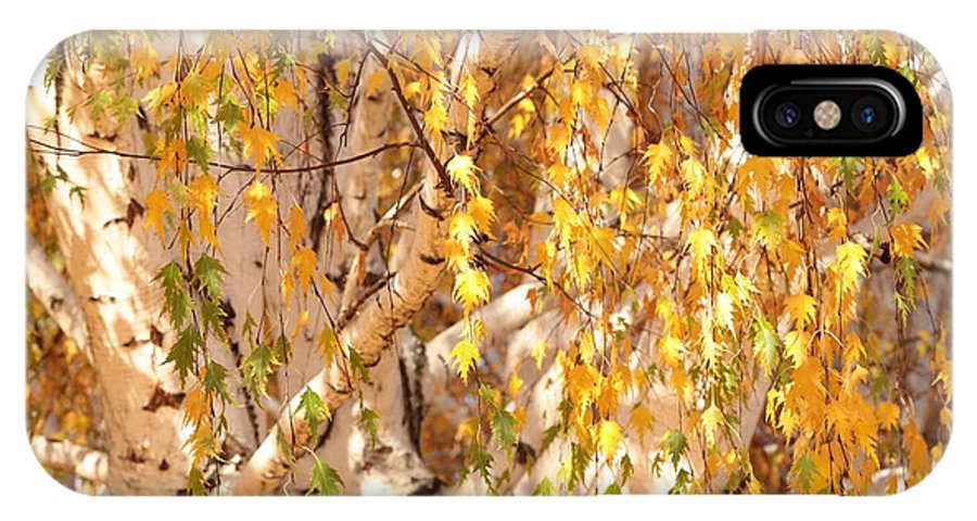 Autumn Birch Leaves IPhone X Case featuring the photograph Autumn Birch Leaves by Carol Groenen