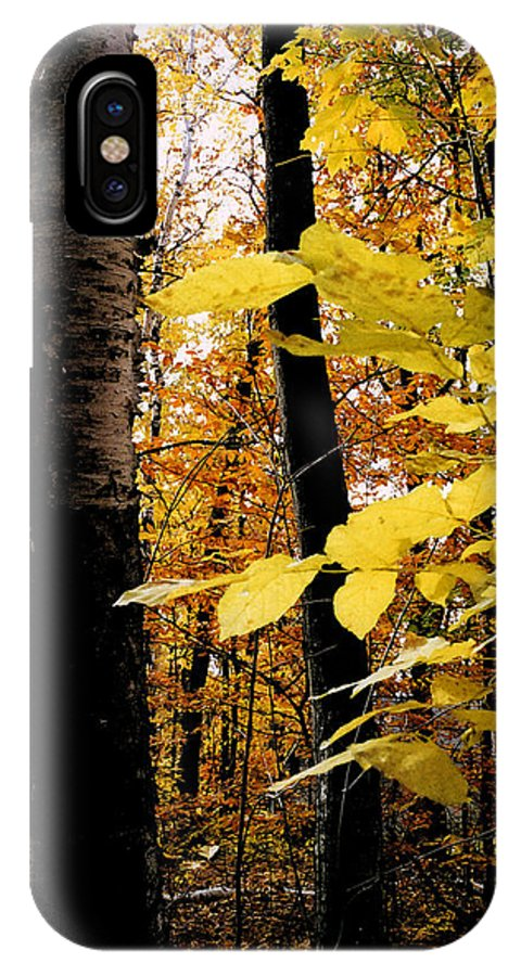 Green IPhone X Case featuring the photograph Autumn Birch Trees by Michelle Calkins