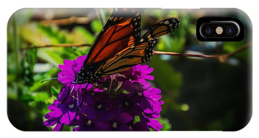 Butterfly IPhone X Case featuring the photograph Autumn Butterfly by Sherman Perry