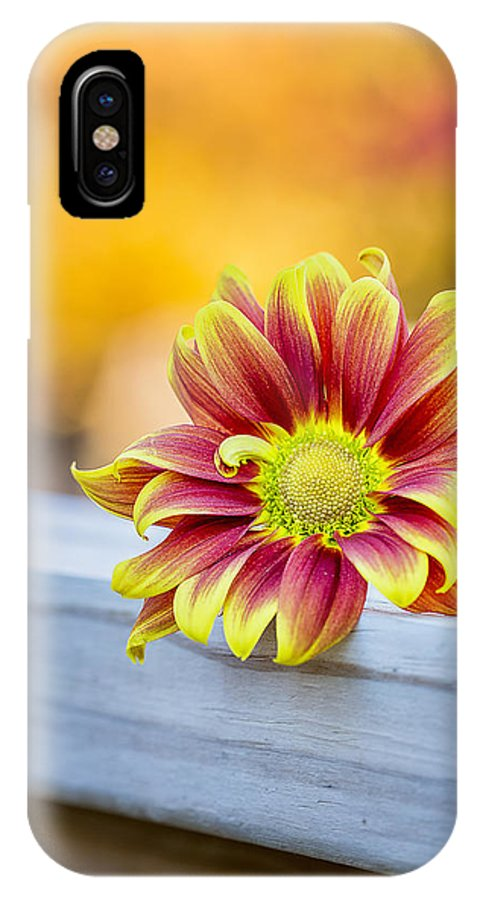 Autumn Color IPhone X Case featuring the photograph Autumn Daisy by Bill Tiepelman