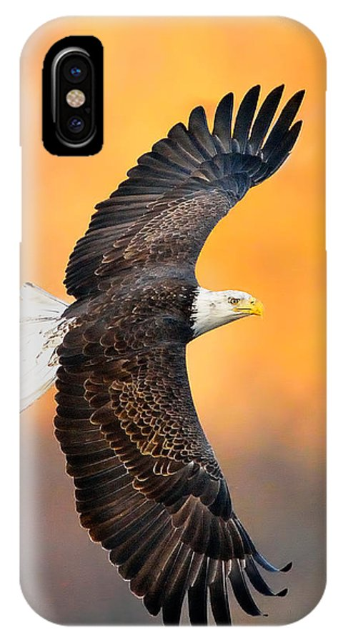 Eagle Photograph IPhone X Case featuring the photograph Autumn Eagle by William Jobes