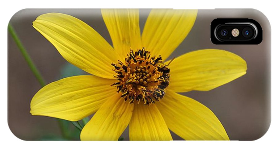 Macro IPhone X Case featuring the photograph Autumn Flower by Ester Rogers