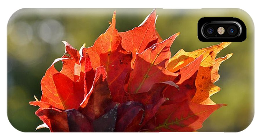 Autumn Flower IPhone X Case featuring the photograph Autumn Flower by Sonali Gangane