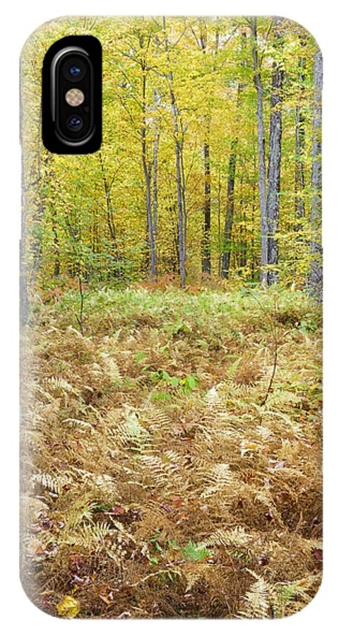 Autumn IPhone X Case featuring the photograph Autumn Forest - White Mountains New Hampshire by Erin Paul Donovan