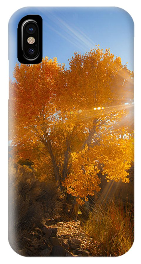 Autumn Tree IPhone X Case featuring the photograph Autumn Golden Birch Tree In The Sun Fine Art Photograph Print by Jerry Cowart