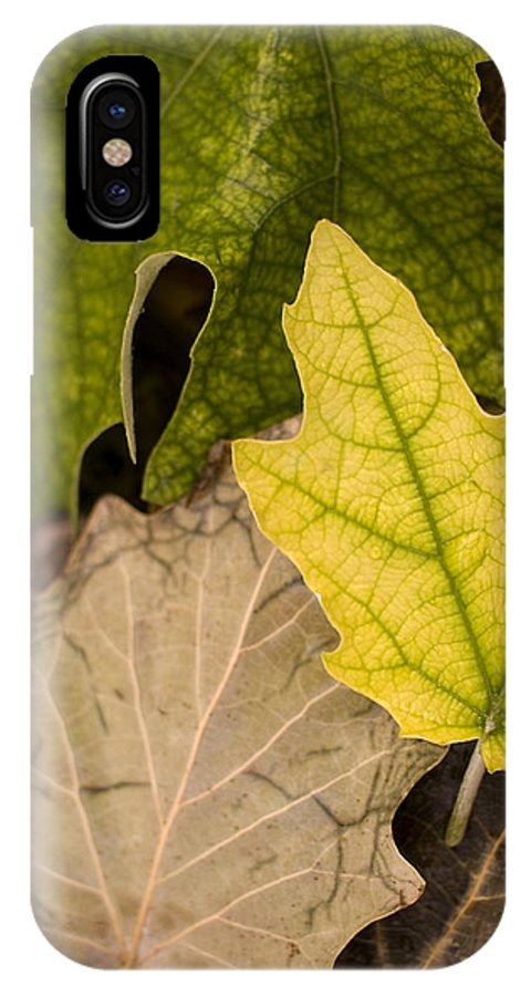 Nobody IPhone X Case featuring the photograph Autumn Is Coming 1 by Pedro Cardona Llambias