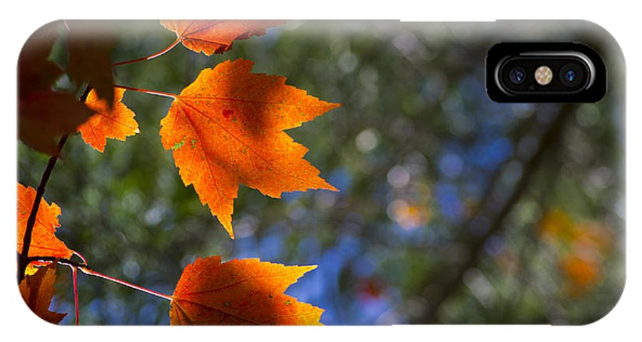 Fall IPhone X Case featuring the photograph Autumn Maple Leaves In The Sun by Fred Ziegler
