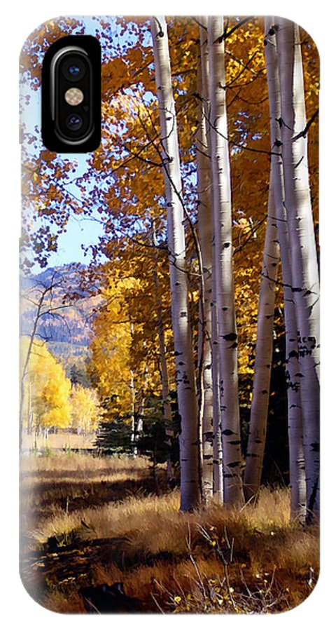 Trees IPhone X Case featuring the photograph Autumn Paint Chama New Mexico by Kurt Van Wagner