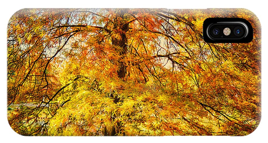 Tree IPhone X Case featuring the photograph Autumn Tree by Michael Pachis