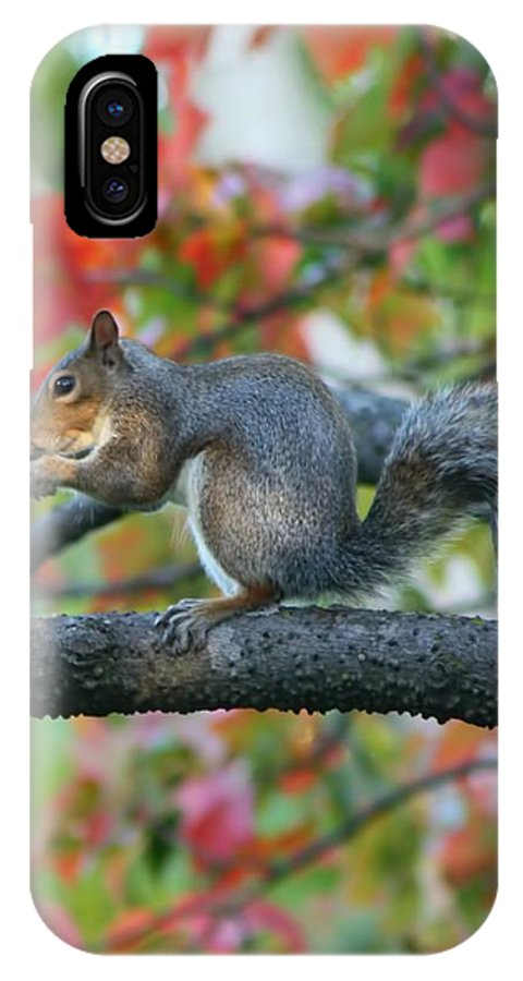 Squirrel IPhone X Case featuring the photograph Autumnal Squirrel by Amanda Stadther