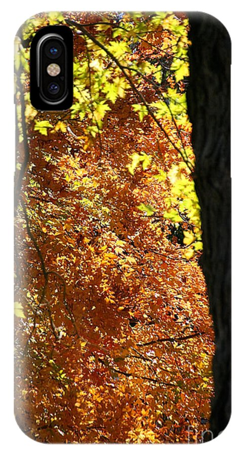 Flower IPhone X Case featuring the photograph Autumn's Golds by Susan Herber