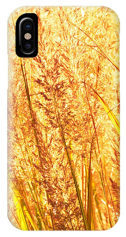 Grass IPhone X Case featuring the photograph Autumns Passion by Bob Orsillo