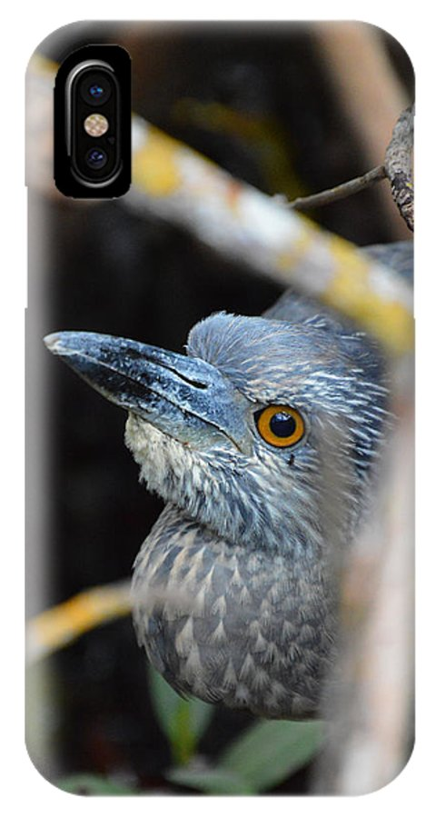 Chicago Bears IPhone X / XS Case featuring the photograph Baby Blue by Jimi Bush