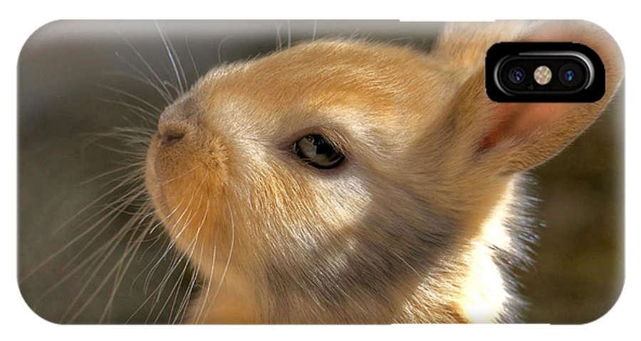 Rabbit IPhone X Case featuring the photograph Baby Bunny by TJ Baccari