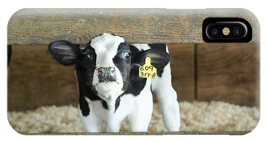 Cow IPhone X Case featuring the photograph Baby Cow by Louise Magno