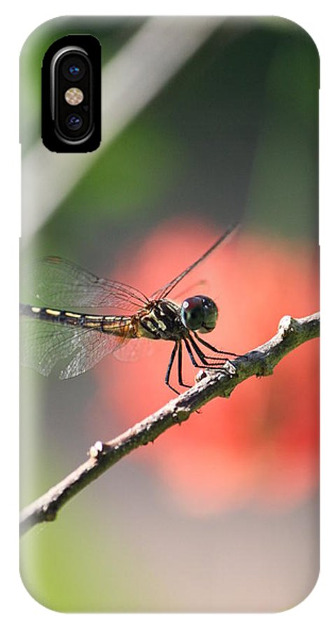 Dragonfly IPhone X Case featuring the photograph Baby Dragonfly by Mandy Shupp