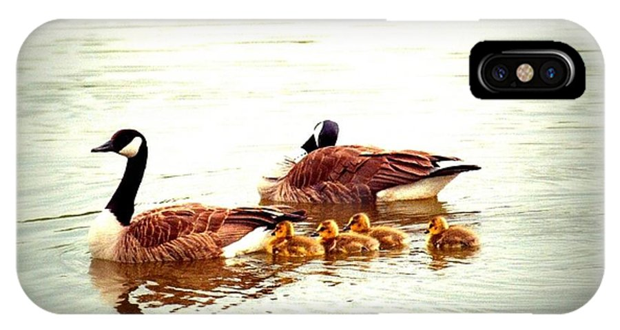 Water Fowl IPhone X Case featuring the photograph Canada Geese Family by Elaine Burlew