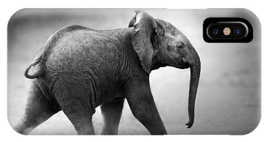 Elephant IPhone X Case featuring the photograph Baby Elephant Running by Johan Swanepoel