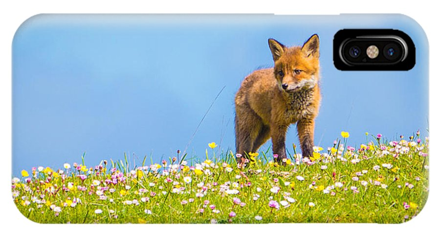 Baby IPhone X / XS Case featuring the photograph Baby Fox In Field Of Flowers by Scott Carlin