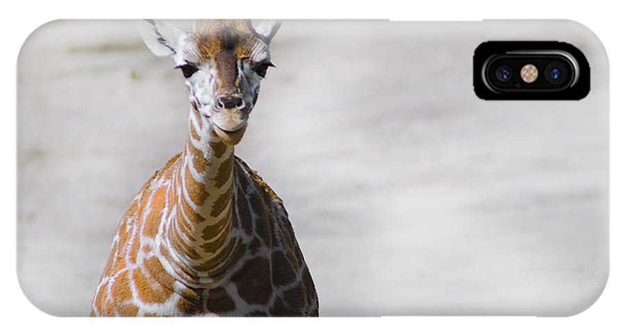 Giraffe IPhone X Case featuring the photograph Baby Giraffe by Camille Lopez