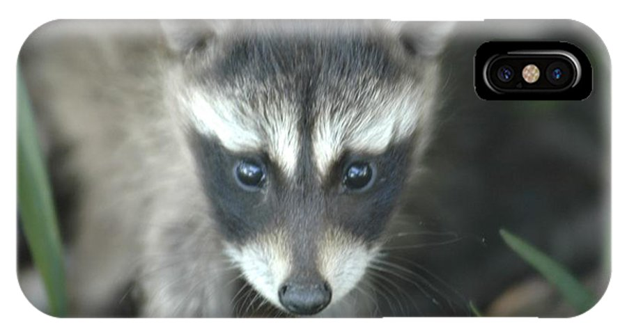 Racoon IPhone X Case featuring the photograph Baby Racoon by Hella Buchheim