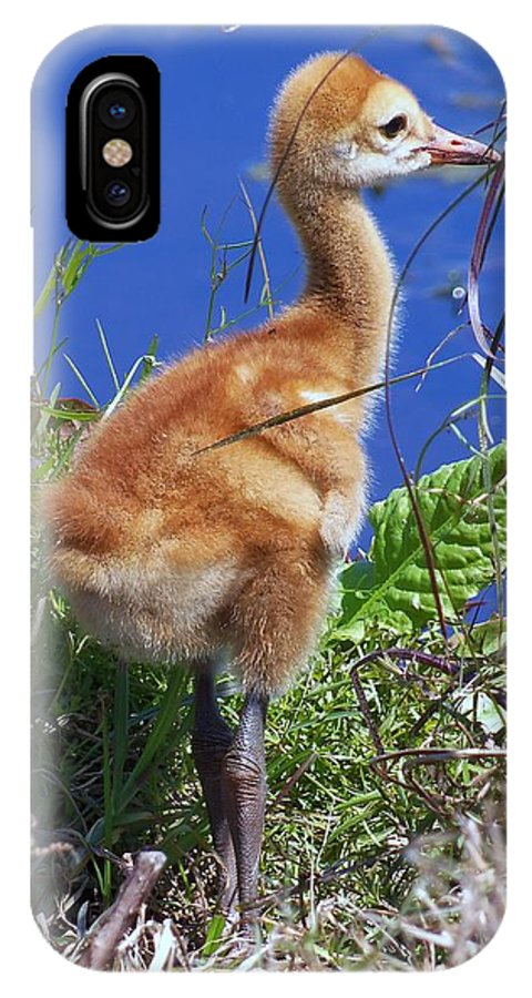 Sandhill Crane Chick IPhone X Case featuring the photograph Baby Sandhill Crane 064 by Chris Mercer