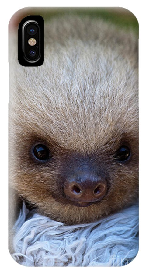 Sloth IPhone X Case featuring the photograph Baby Sloth by Heiko Koehrer-Wagner