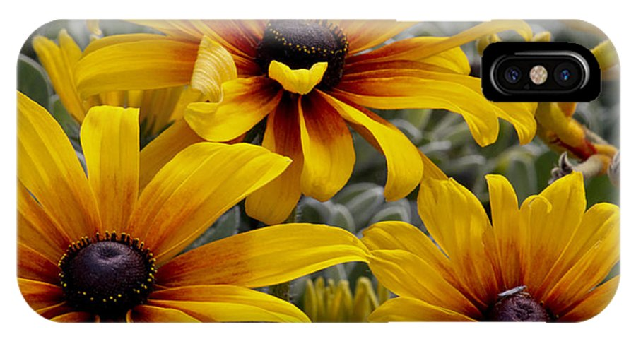 Back Eyed Susan IPhone X Case featuring the photograph Back-eyed-susan by Ivete Basso Photography