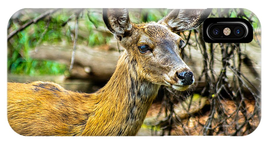Blacked-tail IPhone X Case featuring the photograph Back-tail Doe by Robert Bales